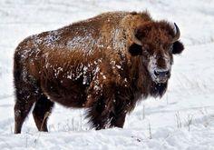 Hibernation Is Overrated For The Critters Of The Black Hills Storybook Island, South Dakota Travel, Dinosaur Park, Custer State Park, Wildlife Safari, Rapid City, Horseback Riding, Cow, National Parks