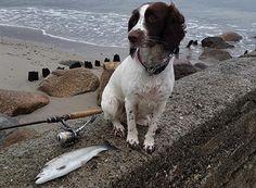 IFISH | Kystfiskeri efter havørred