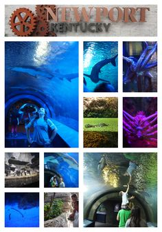 Summer travel with Kids:  Newport Aquarium in Newport, KY / Cincinnati, OH