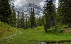 Austria, Montañas, Alpes, prado, TRAIL, árboles, paisaje
