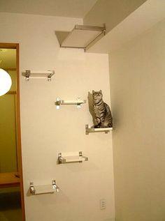 DIY Cat Perches!