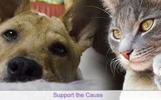 animals cat and dog #animals #cat #dog