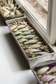Propagate succulents with the leaf cuttings, using honey as root hormone.