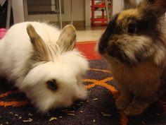Panna e Nocciola #conigli #cute