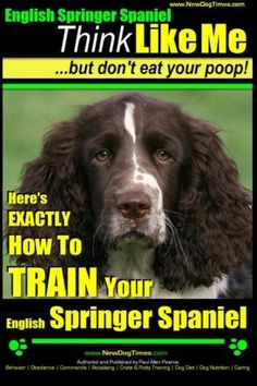 English Springer Spaniel  Think Like Me But Dont Eat Your Poop Heres Exactly How To Train Your English Springer Spaniel English Springer Spaniel Dog Training Volume 1 *** Check this awesome product by going to the link at the image.