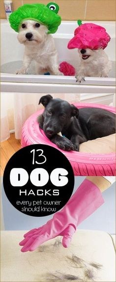 13 Dog Hacks. Tips a