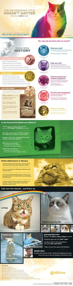So why do we love cats so much?