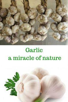 Garlic – a miracle of nature Read more at: http://www.alltraditionalherbs.com/garlic-a-miracle-of-nature/