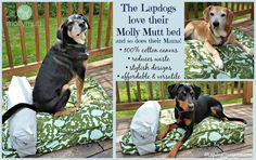 The Lapdogs love their #MollyMutt bed and so does their Mama! Completely washable, affordable, stylish and affordable - what's not to love? #recycle #dogbed #abedoftheirown #rescuedogs #happydogs #LapdogCreations ©LapdogCreations Dog Mom | Rescue Dog | Dog Bed | Giveaway | Dog Products