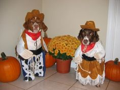 Dogs pretending to be a cowboy and cowgirl!!!
