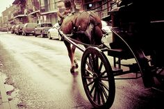 Horse Drawn Carriage in New Orleans