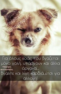 Greek Quotes, Quote Of The Day, Thoughts, Pets, Funny, Animals, Animales, Animaux, Funny Parenting