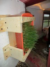 Chicken coop sprout feeder