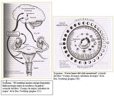 El continuo mente-cuerpo femenino. Interacciones entre el cerebro y la pelvis. - Carta lunar del ciclo menstrual