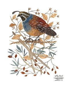 quail bird art print by golly bard by GollyBard on Etsy, $36.00