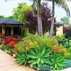 Creative front-yard makeovers   Steer clear of thirsty plants   Sunset.com