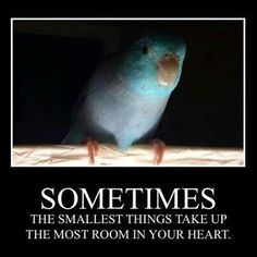 Quote from Winnie the Pooh. And so true of precious birds.all kinds of birds; All Birds, Cute Birds, Pretty Birds, Beautiful Birds, Cockatiel, Budgies, Parrots, Bird Quotes, Parrot Quotes