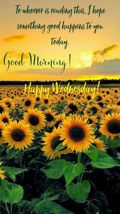 Good Morning! Happy Wednesday! To whoever is reading this, I hope something good happens to you today. #goodmorning #happywednesday #gm #gmw #wednesday #happy #morning #morningpost #thegrind #wednesdays #wednesdaymorning #good #sunflower #goodmorningpost #sunflowers #memes #meme #coffeetime #coffee #love #life #lovelife #livelifetothefullest #livelife #live