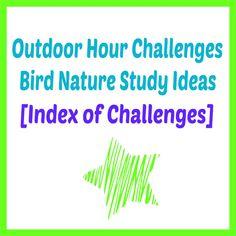Outdoor Hour Challenge Bird Nature Study Index of Challenges Spring Birds, Kindergarten Science, Charlotte Mason, Nature Study, School Fun, Challenges, Teaching, Study Ideas, Daycare Ideas