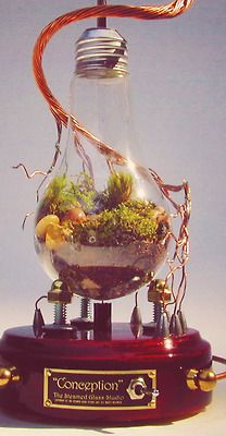 Steampunk terrarium