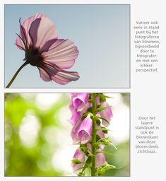 Standpunt fotografie bij bloemen