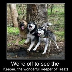 """Funny Dogs with Captions   Funny pictures w/ captions-602792_10200933303960063_680601622_n.jpg Just a smile to make you smile today :)  Want to smile some more? Use Coupon code """"Summer"""" at sahlenfashion.com for a 20% discount  :) Have a lovely day!"""