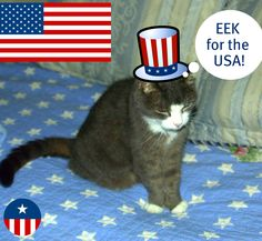 "IMPORTANT ANNOUNCEMENT: EEk my 21 year old cat has changed her party affiliation and is now a Republican. Today she has declared her candidacy for Presidency, and is actively seeking A SUPERPAC to not coordinate with in order to secure air time for her announcement speech. In her first sound byte today she said "" I am a bastard , let's get that out there right now. My father was a wild one and my mother hung out in alleys , giving it up to anyone who was around. I'm not pretending to be…"