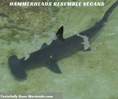 #Vegans are hard-headed like these hammerheads. And they both look weird. Just sayin. #Sharks #Funny #Wildgame