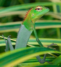 #lizard #reptile #green