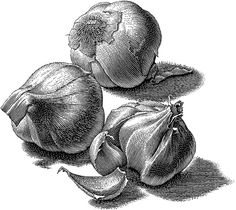 Scratch board drawings of food done with a woodcut or engraved look.