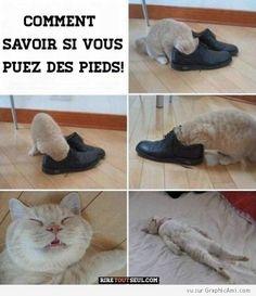 Un chat joue avec une chaussure.