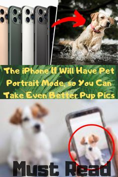 The iPhone 11 Will Have Pet Portrait Mode, so You Can Take Even Better Pup Pics Cute Relationship Goals, Cute Relationships, Hear Style, Beautiful Nature Pictures, Weird World, Cute Baby Animals, Pet Portraits, Kittens Cutest, Iphone 11