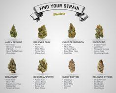 Find Your Perfect Marijuana Strain - #MMJ - http://azmarijuana.com/dans-stash/find-your-perfect-marijuana-strain/