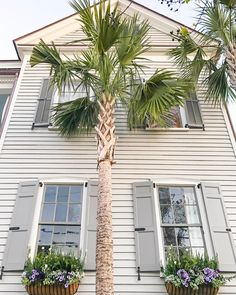 "211 Likes, 4 Comments - 86 Cannon: The Poinsette House (@86cannonst) on Instagram: ""Welcome to your weekend in Charleston! @ashleybrookedesigns #86cannon #lovecharleston #charleston…"""