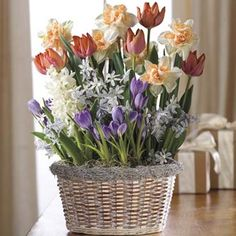 Breck S Gifts Bulb Of The Month Club Flowering Gifts Pinterest