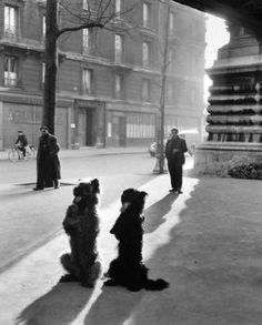 by Robert Doisneau, French photographer. In the he used a Leica on the streets of Paris. He and Henri Cartier-Bresson were pioneers of photojournalism (Wikipedia). Robert Doisneau, Henri Cartier Bresson, Black And White Dog, White Dogs, Old Photography, Street Photography, Poster Art, Photo Portrait, French Photographers