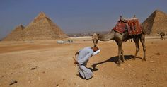 Homem beija camelo na boca nas pirâmides Plateau, em Giza, no Egito.