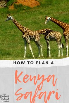 Dreaming of seeing the Great Migration? Elephants and lions in the wild? Here's what you need to know about planning a safari to Kenya! Things to do in Kenya / Where to safari in Kenya / The Great Migration Plan A, How To Plan, The Great Migration, Wild Lion, Kenya Travel, Air Balloon Rides, Baboon, Rainy Season, Tourist Places