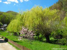 Manastirea Prislop Most Beautiful, Beautiful Places, Vineyard, Outdoor, Vine Yard, Outdoors, Vineyard Vines, Outdoor Games, The Great Outdoors