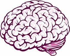 Just 30 minutes of exercise has benefits for the brain University of Adelaide neuroscientists have discovered that just one session of aerobic exercise is enough to spark positive changes in the brain. Memory Loss Causes, University Of Adelaide, Fitness Facts, Brain Injury, Brain Food, Neuroscience, Your Brain, Planner Stickers, Improve Yourself