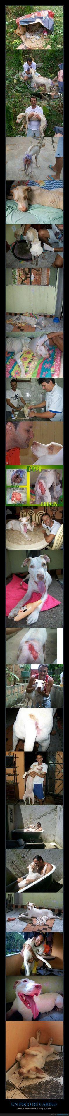 Hem perdut humanitat. A dog's life: solo un poco de amor