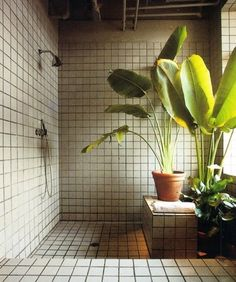 shower with plants.