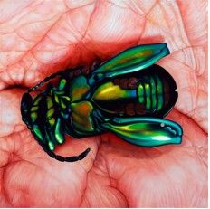 "Price: $2,700  Edie Nadelhaft  Palmed Beetle  Oil on Canvas, 36"" x 36""  Estimated Value: 5,000  Contact: charlotte@rushartsgallery.org"