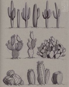 "simkaye: ""Ballpoint pen sketches I did the other day 🌵 "" Plant Sketches, Art Drawings Sketches, Pencil Drawings, Cactus Drawing, Plant Drawing, Desert Drawing, Desert Tattoo, Cactus Tattoo, Drawing Sheet"