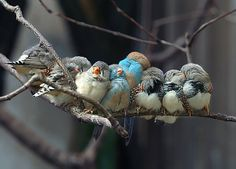 """""""Look at the birds of the air; your heavenly father feeds them. Are you not much more valuable than they?""""    Jesus"""