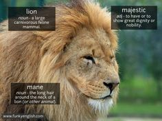 Lion - www.funkyenglish.com