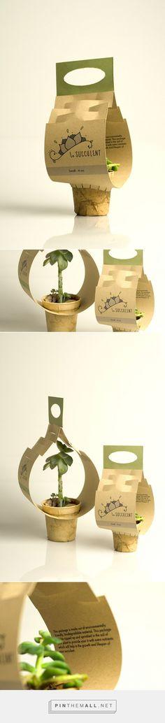 Succulent project by Michaela Murphy