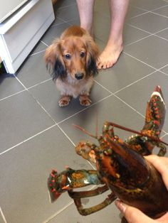 Leo does not like Mr. Lobster www.lesbananas.us
