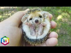 Top 10 SMALLEST DOG BREEDS - YouTube