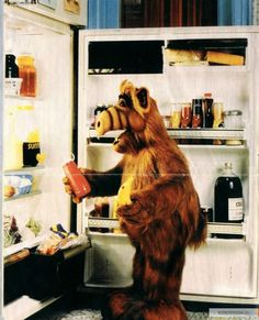 alf..you cant tell me you didnt watch this growin up